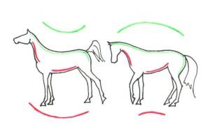 Bron: Paarden Begrijpen